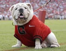 2012 college football win totals - UGA Mascot